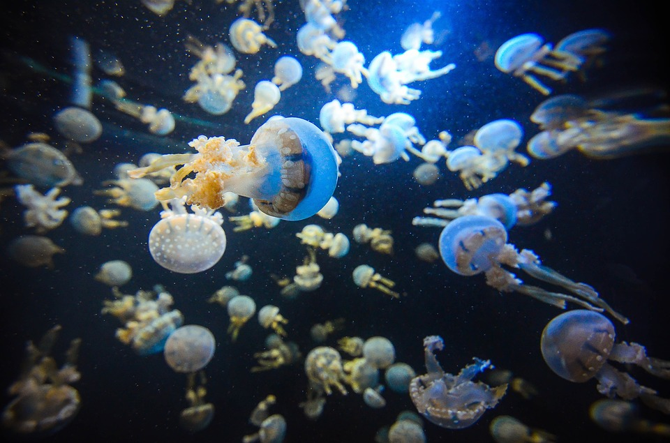 SEA Aquarium Marine Life